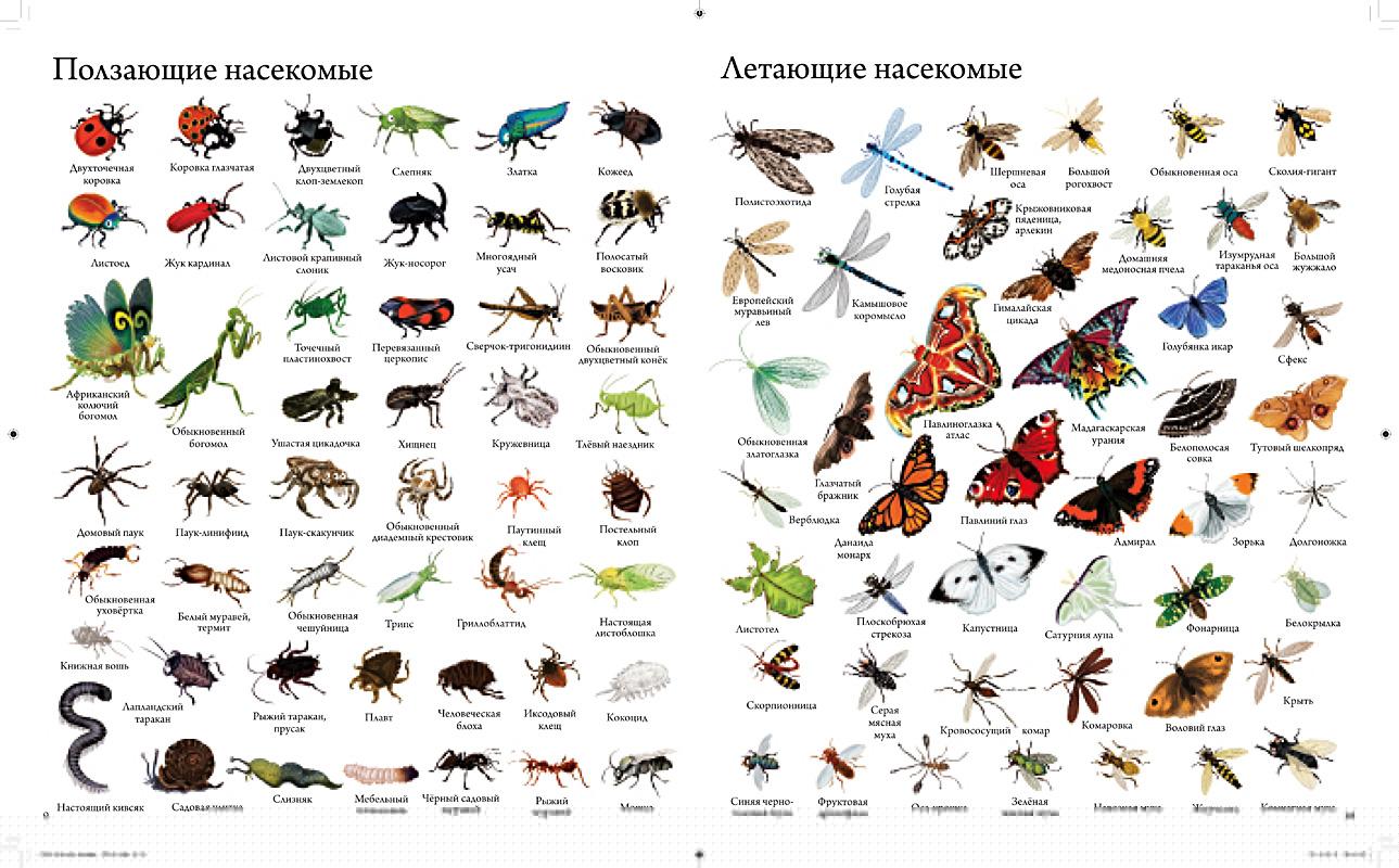 шаблон насекомые список с картинками данные, которые удалять