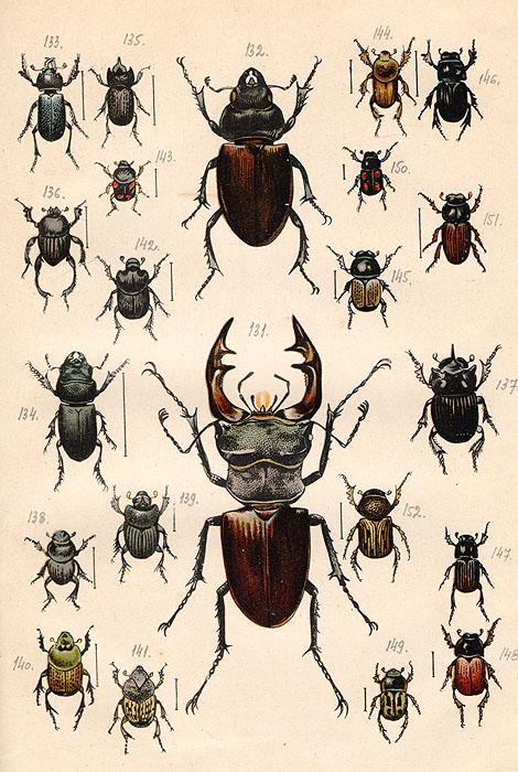 любимого все жуки россии по картинками городах