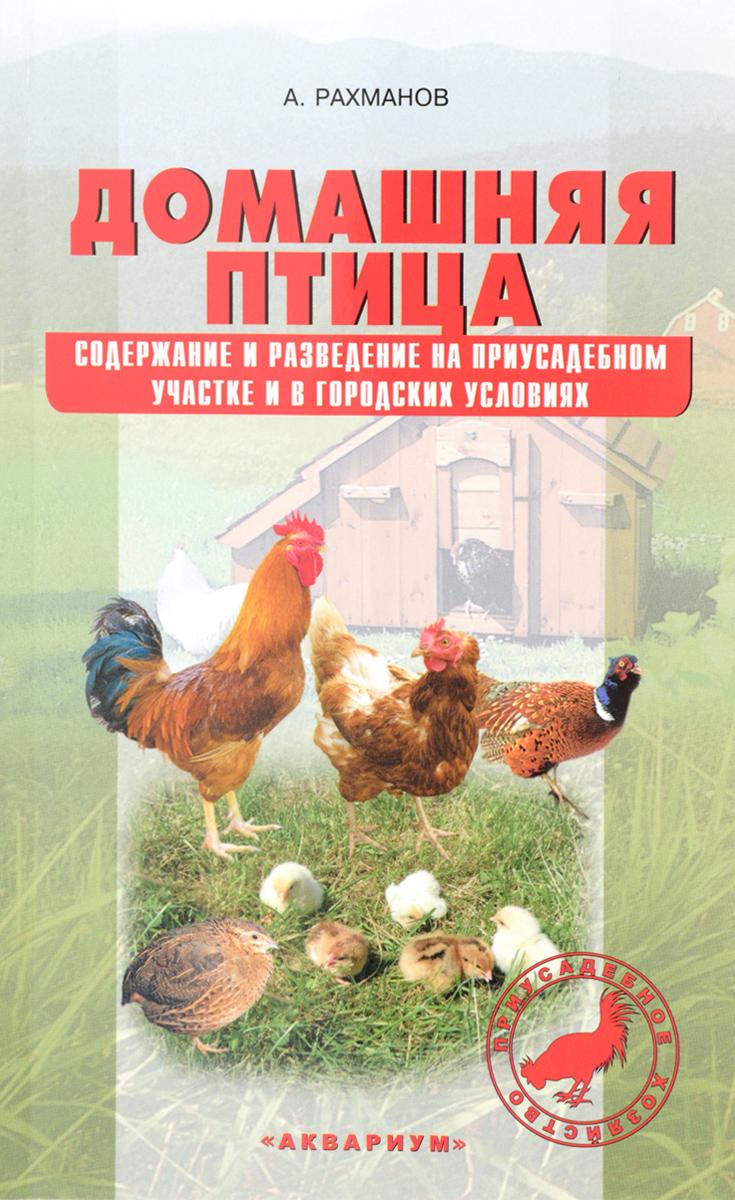 Содержание и выращивание птицы 906