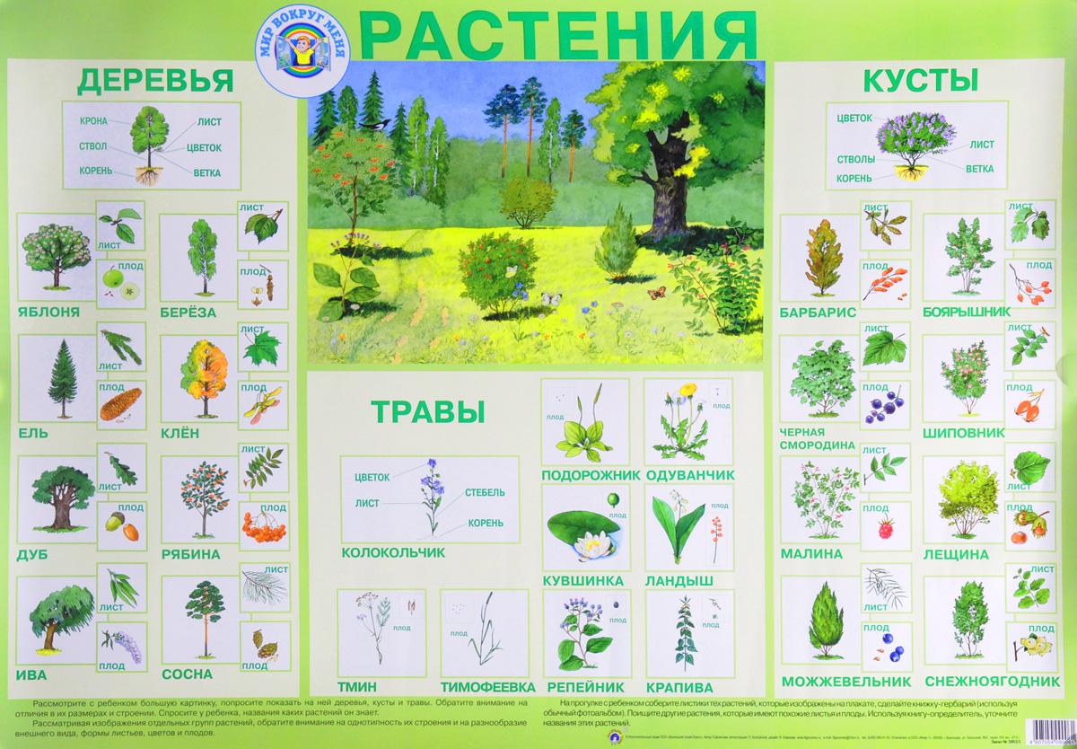 тогда они картинки по теме кустарники и их названия данные
