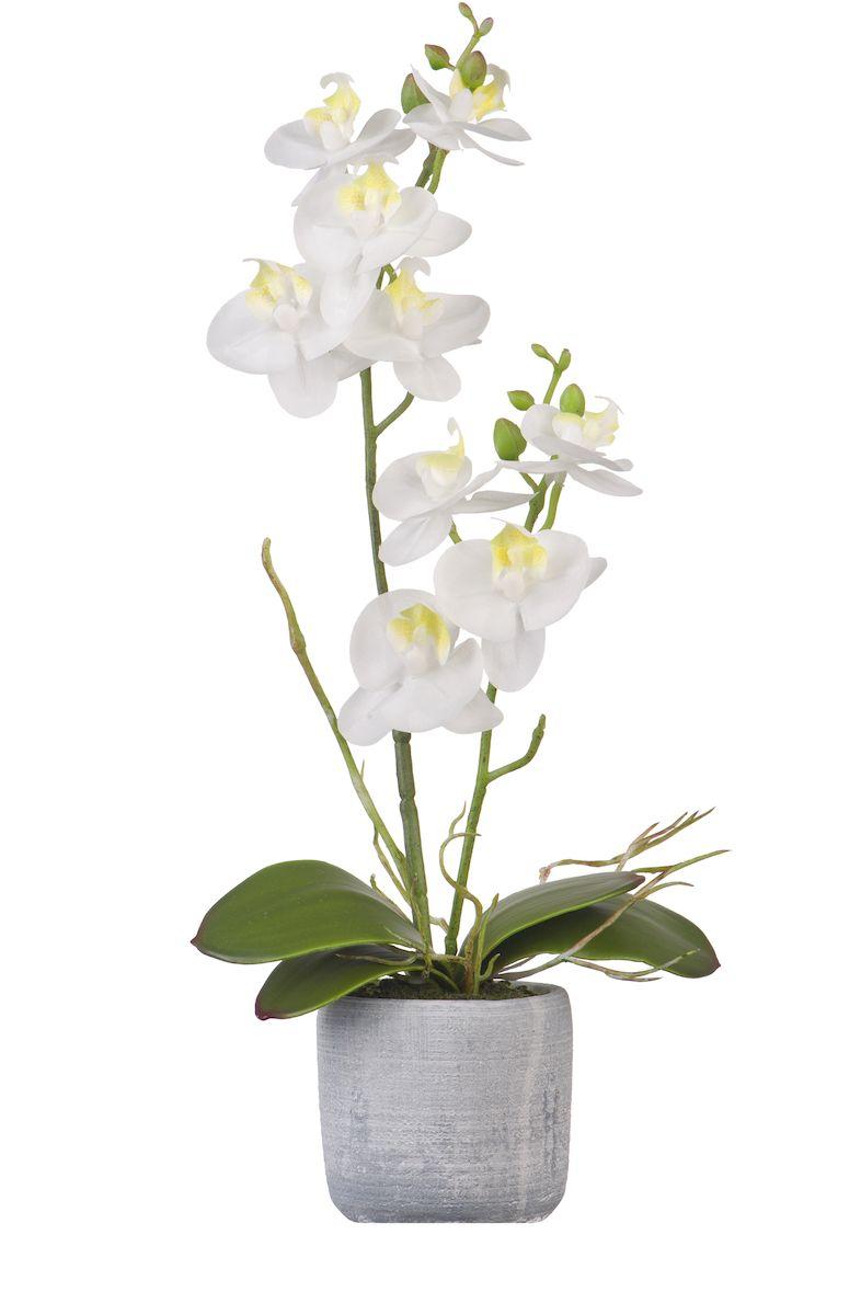вазон орхидея картинки всему