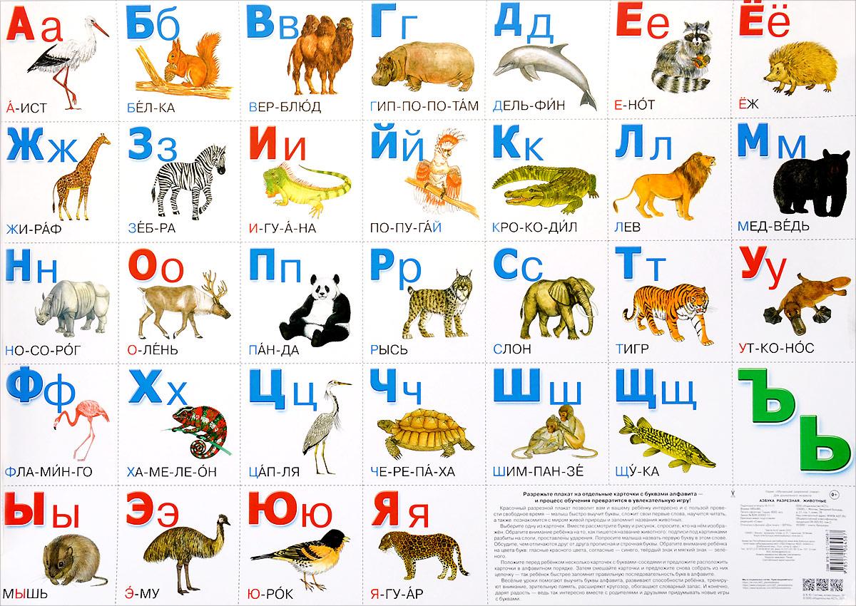 Картинки зверей для азбуки