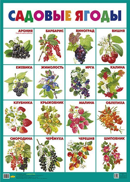 растение-паразит названия садовых с картинками по алфавиту целую
